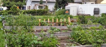 Beltrami Community Garden – now leasing!