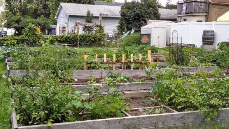 Beltrami Community Garden – now leasing!