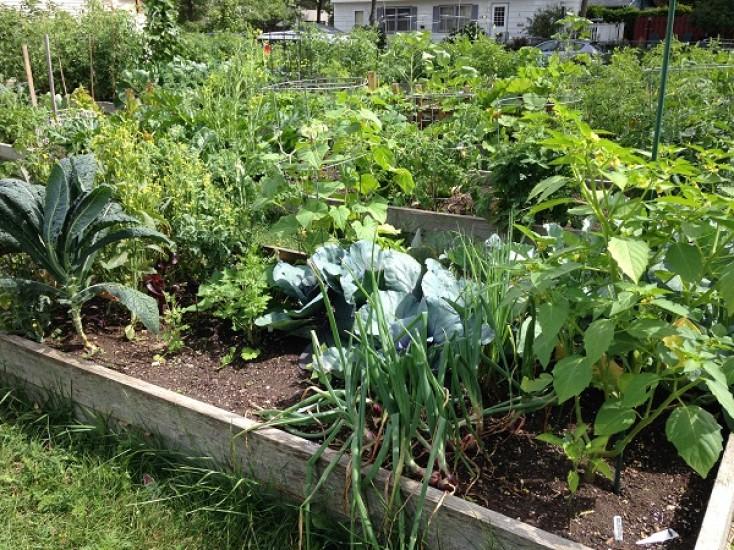 Now Hiring: Garden Coordinator