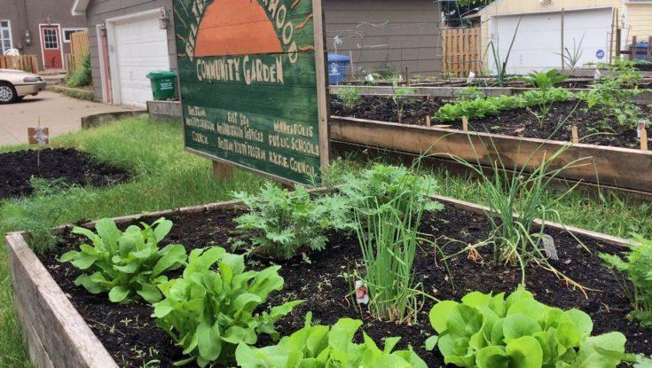 Apply for a Plot in the 2020 Beltrami Community Garden